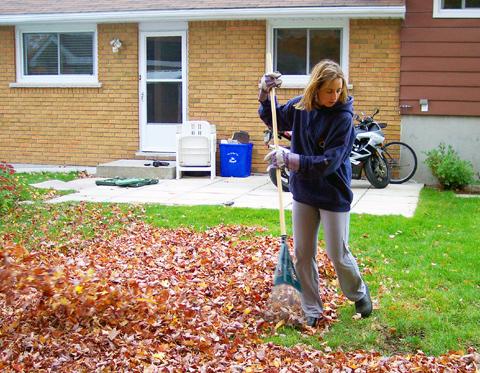 Amy raking away